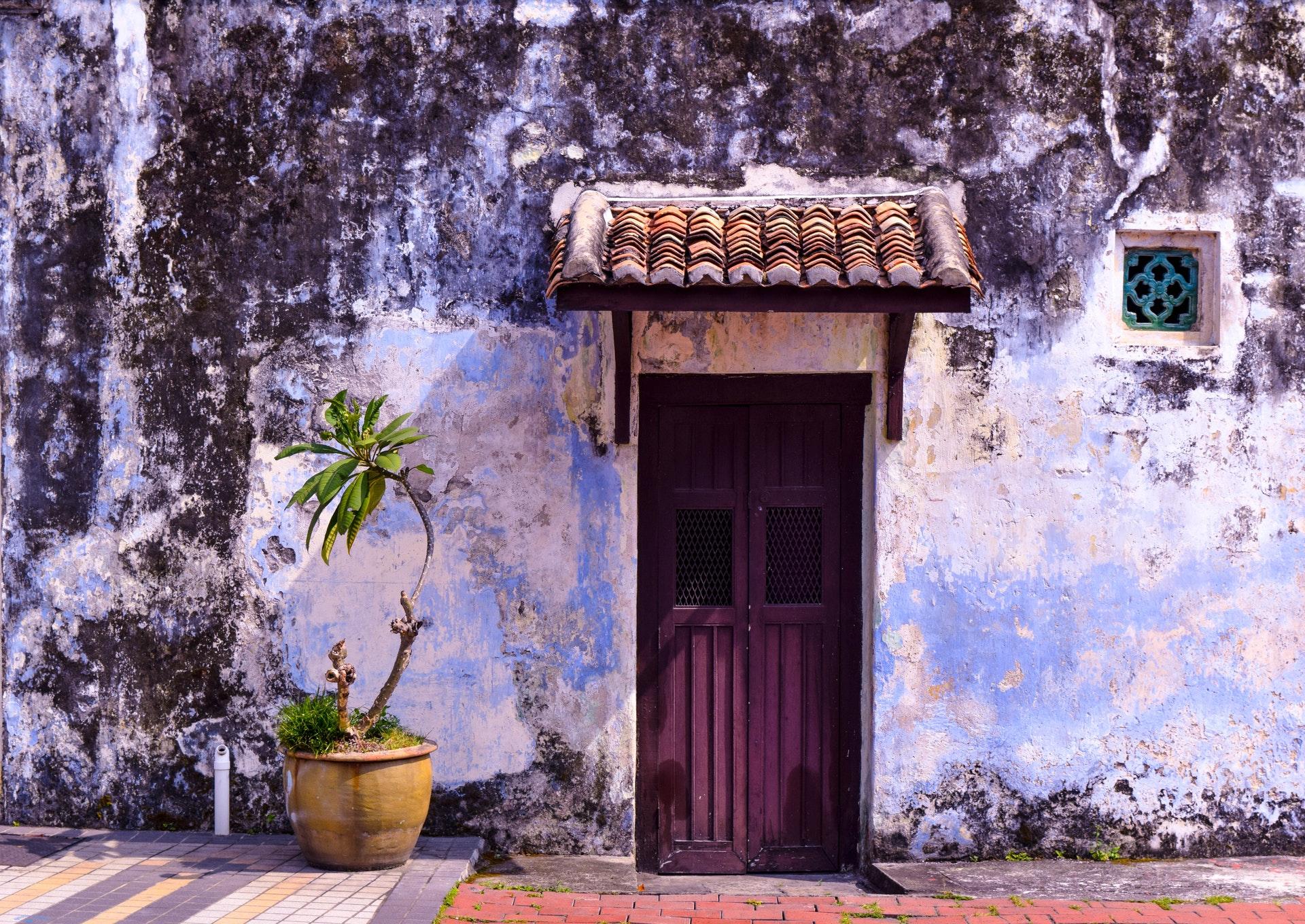 green-plants-beside-purple-wooden-door-2306365
